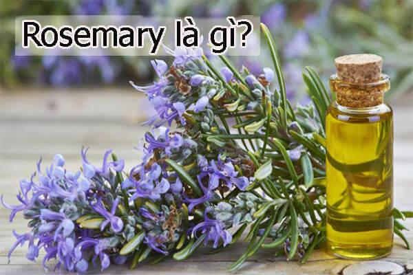 Rosemary là gì?